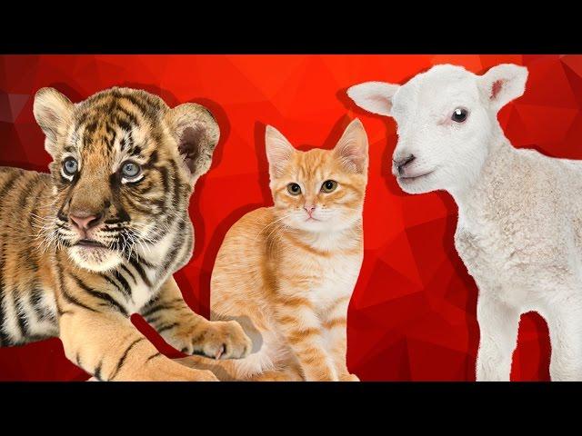 Çiftlik ve Orman Hayvanlarının Yavruları - Çocuklar İçin Hayvanlar
