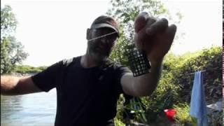 Pêche feeder sur la Sarthe