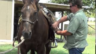 8 of 8 - New Guy With No Horse Exp Saddles Up Mr. T & Rides Him First Time