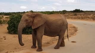 Port Elizabeth. Addo Elephant park
