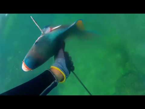 Spearfishing At Churna Island
