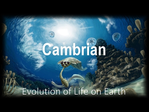 The Evolution of Life part 2 : Cambrian