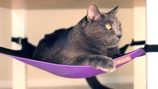 Cat Crib - Hammock Lounger