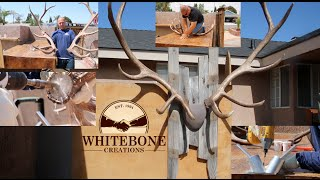 HOW TO MOUNT SHED ANTLERS DIY