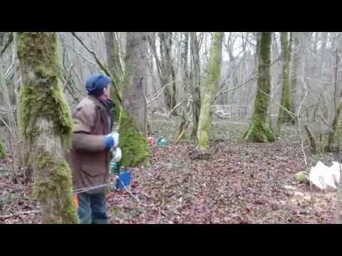 Arracher des souches de buis doovi - Comment detruire une souche d arbre ...