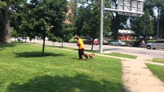 Improving the Life of A Shelter Dog. Pit Bull Training With Tyler Muto