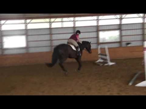 Caspian - TB/WB cross, Great Children's/Adult Horse for sale