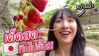 เก็บสตรอว์เบอร์รี่หวานฉ่ำที่สุดในญี่ปุ่น ณ ถิ่นผลิตผลไม้ชั้นนำ!!【เที่ยวโอคายาม่า EP.2】#ซอฟท่องโลก