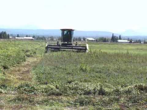 Fall River Mills Mint Harvest