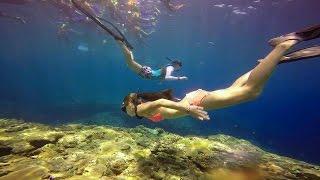 蘭嶼潛水遇到三條魚SSI Freediving