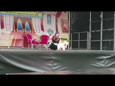 All About Dogs Show - Dog's Got Talent