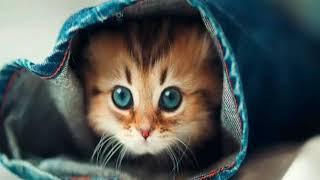 Мои заставки котят!!!.