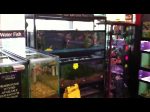 Shop tour of Frisby aquatics hull - YouTube