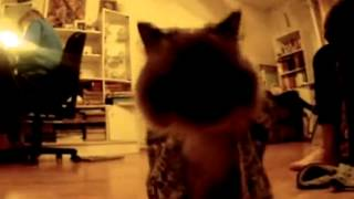 Коты в варежках