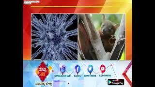 Two Nipah Virus Infected Case Found In Mangalore | ಸುದ್ದಿ ಟಿವಿ