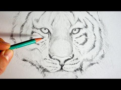 Comment Dessiner Un Tigre Facilement