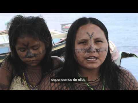Español: Movimiento Ipereg Ayu, Brasil - Premio Ecuatorial 2015