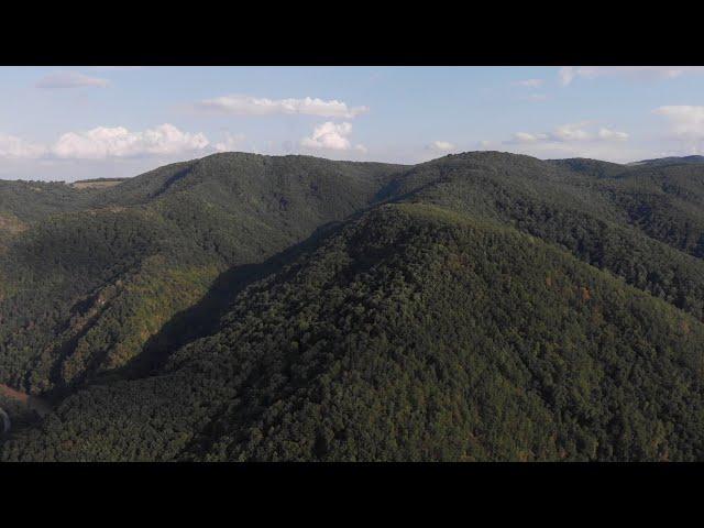 Peste vale, peste pădure (Buru)