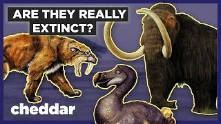 How Do We Know If Animals Are Actually Extinct? - Cheddar Explores