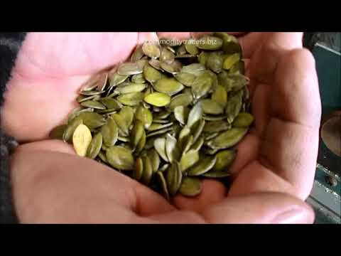 Pumpkin Seed Cleaning Lab Test