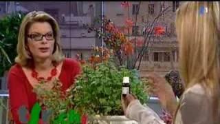 Dolce vita - Les recettes de Grand-mère: la menthe