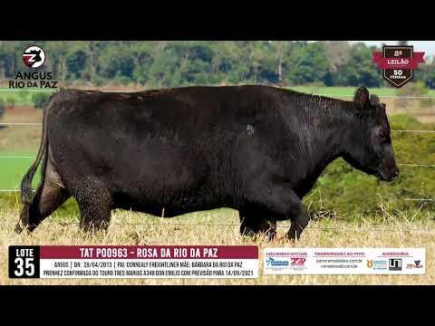 LOTE 35 PO0963 ROSA DA RIO DA PAZ - Prod. Agência e TV El Campo