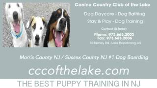 Morris County New Jersey Puppy Training