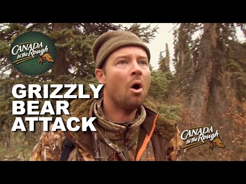 GRIZZLY Bear In The Yukon (BEAR ATTACKS MOOSE!!!)