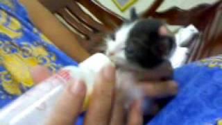 My new born baby girl drinking milk.3gp