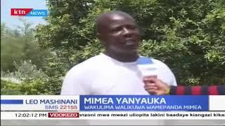 Wakulima eneo la Magharibi wakadiria hasara, mimea yao ikinyauka shambani