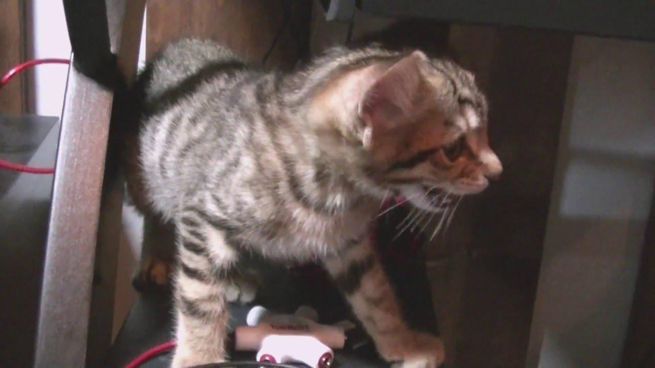 Stray Cat Picked Up Kitten