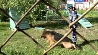 Показательные выступления служебных собак прошли в Вологде