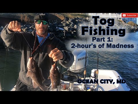 Tog Fishing Was On Fire (Part 1 Of 2), Ocean City, MD