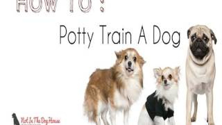 How To Toilet Train A Puppy In 7 Days - Free Guide
