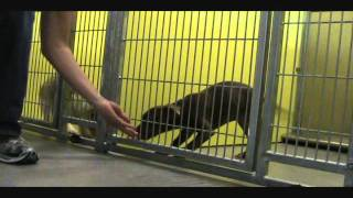 Shelter Puppy Training - Sit - Positive Dog Training In Jacksonville, Fl