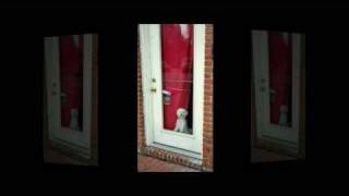 Learn Ways To Stop Dogs Barking - 1: At The Doorbell