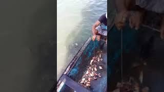 Дед Ашот со своим братом ловит рыбу