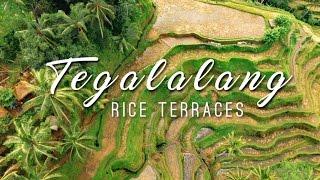 Tegalalang Rice Terraces || BALI DRONE TRAVEL VLOG || Ubud, Indonesia