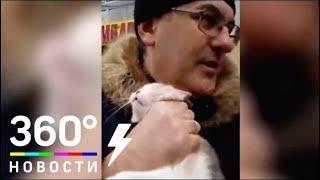 В Ростове-на-Дону спасли британского кота - МТ