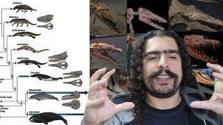 Origem e Evolução das Baleias (#Pirula 266)