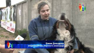 Собаки показали, как надо защищать хозяина