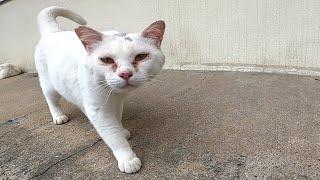 出した指を軽く叩いてくる野良猫がカワイイ