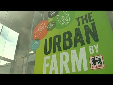 """""""Urban Farm"""": mangiare bio a Bruxelles"""