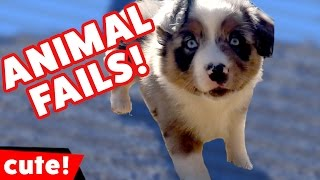 Funniest Animal Fails Compilation October 2016 | Kyoot Kids