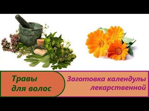 Ноготки лекарственные (календула) - свойства, лечение
