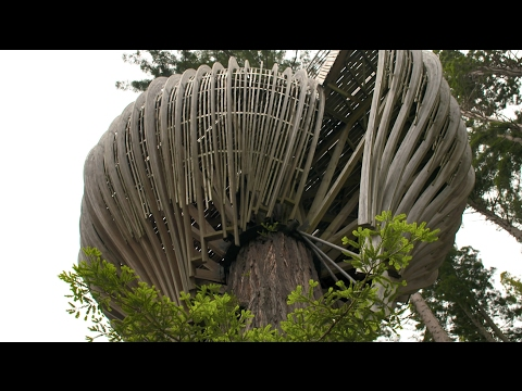 How to create an onion-shaped tree house? WOODIVERSAL meets TimberLab Solutions Ltd