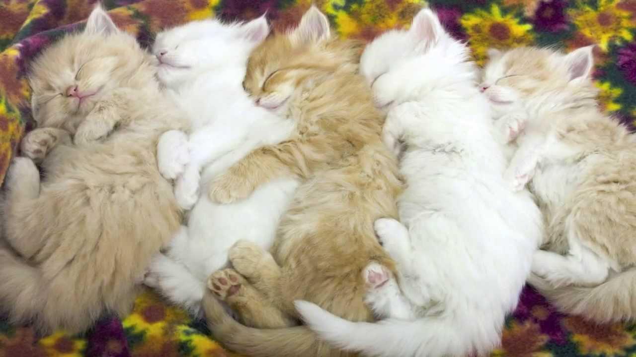 連なって眠る子猫