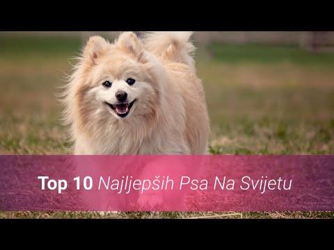Koji Su Najljepši Psi Na Svijetu? Top 10 Najljepših Pasmina Pasa 🐶