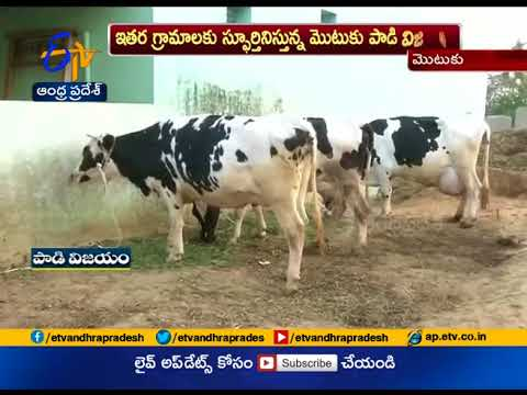 ETV Special Story On A Model Village Mottuku | Chittoor district