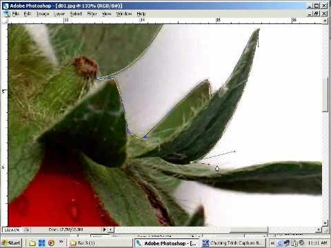 Học photoshop online kỹ năng Lọc hình, layer, blending mode bài 5 Phần 2